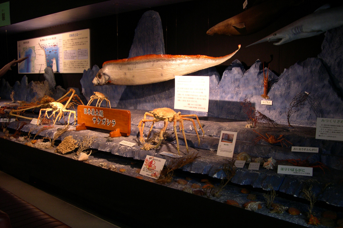 駿河湾深海生物館